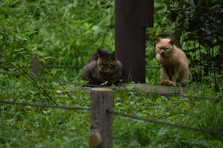 The beautiful wild cats on the green field in Tokyo Japan