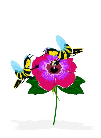 camellia: Bee on Camellia Illustration