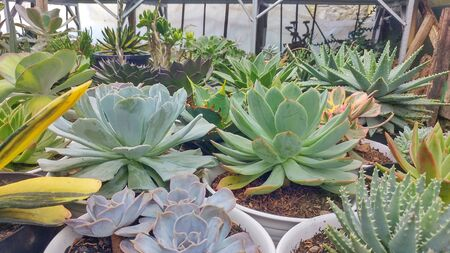 many plants with various types in pots
