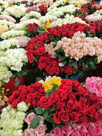 many red and white roses are arranged neatly in pots