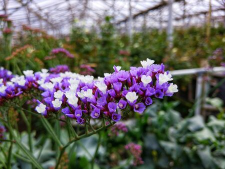 purple flowers with motion blur