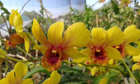 yellow orchids with green leaves hanging