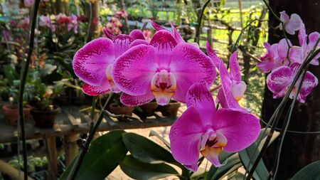 purple orchids with green stems Stock Photo