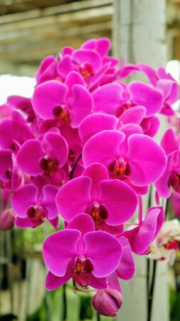 purple orchids with motion blur