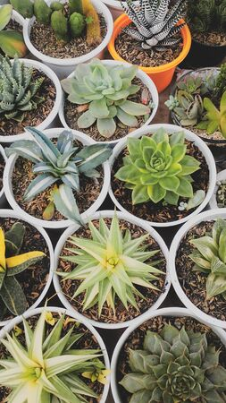 lots of colorful cactus in the pot Stock Photo