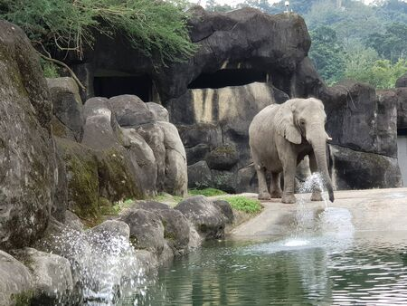 an elephant is playing in the water in its habitat Stock fotó