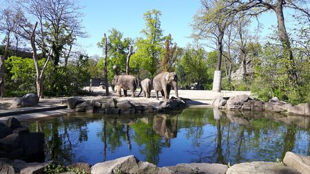 three elephants were basking on the edge of the water in a cage in a zoo