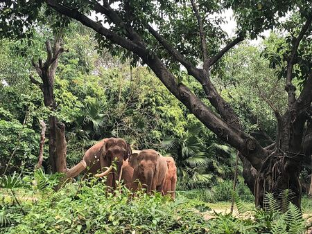 a herd of elephants is in a forest with lots of trees