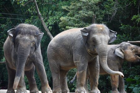 three gray elephants were playing in a cage with tare plants Stock fotó