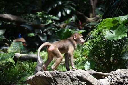 a monkey is walking in a tree with a background of plants Foto de archivo - 133671123