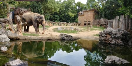 an elephant is standing on the edge of the lake with a cage background in the zoo