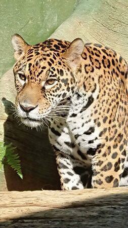 a leopard is looking at its prey against a background of plants