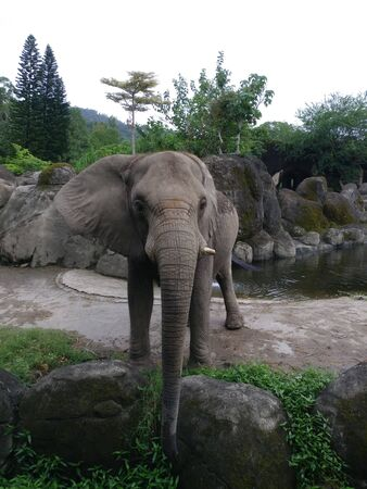 an elephant with a beautiful natural scenery Stock fotó