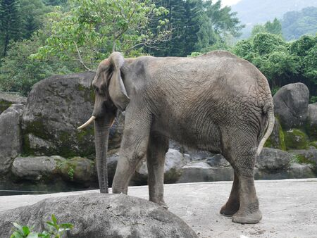 an elephant is standing with his back to the camera in the cage