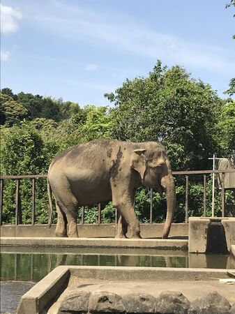 an elephant is walking on a concrete road on the edge of the water in a cage Stock fotó