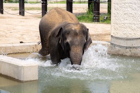 an elephant bathing and drinking water in a bathtub Stock fotó