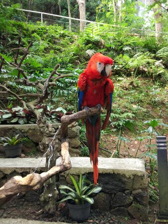 a red parrot perched on a tree trunk Banco de Imagens