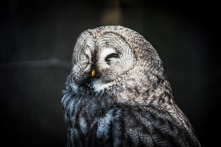 a gray owl with a pattern perched on a tree