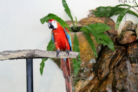 a red feather parrot perched on a tree trunk