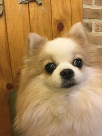 a dog with thick eyes and thick fur