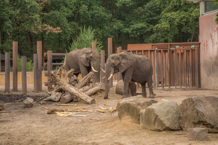 two elephants are playing around a tree trunk in a cage