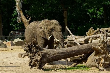 an elephant is playing around a log in a cage