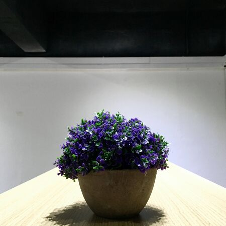 creative co working space office center with green plants,dark oak table,white wallpaper modern open space or shared workplace 版權商用圖片