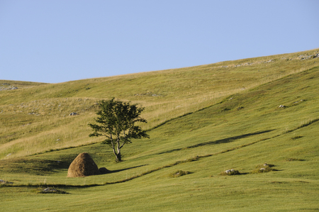 Green meadows in Montenegro countryside with haystack and tree at Biogradska gora nationalni park Stok Fotoğraf