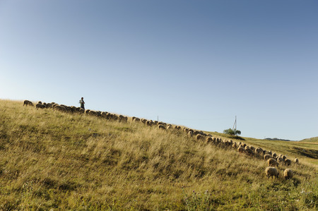 nice light falling on a herd of sheep with a shepherd on a hill in Biogradska gora nationalni park