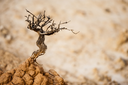 Just like a tint death tree on top of a dry soil hill, closeup from a dried out plant on dry mud Stok Fotoğraf