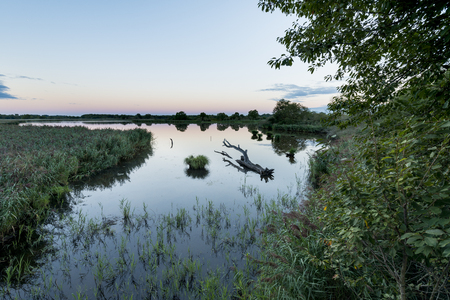 landscape of etang or pond Ricot at reserve naturelle de chérine at natural park of La Brenne