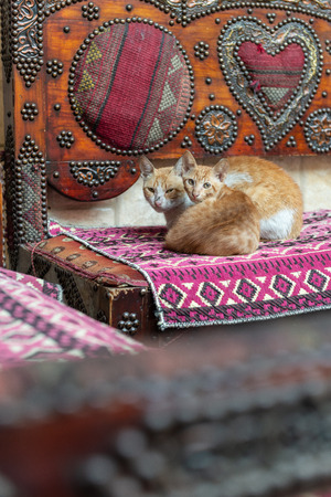 beautiful cats on a decorated arabic seat at a coffee tea bar in the Islamic Cairo, egypt Stok Fotoğraf - 119629186