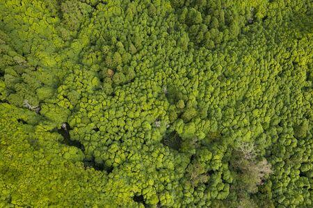 aerial of green tropical like forests and vegetation at Ilha das Flores Island near Poço Ribeira do Ferreiro at the Azores, Portugal