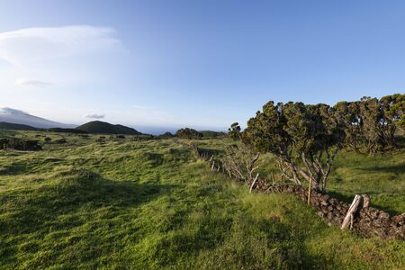 Sunrise countryside landscape at Ilha do Pico's Island Planalto da Achado with typical Azores Heather (Erica azorica) and old lava basalt rock walls deviding the plots of land, Azores, Portugal