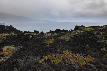 landscape of colorful orange-green vegetation making a beautiful contrast with the black lava beach at the westcoast of Faial Island, Azores.