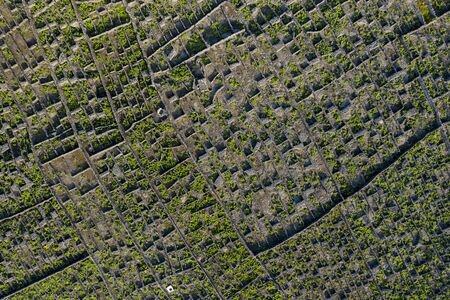 Aerial image showing typical vineyard culture (viticulture) landscape of Pico Island.