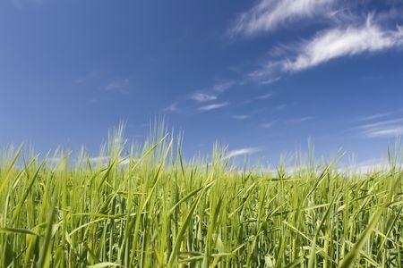 Field, green fields with blue sky. Stock Photo
