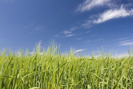 Field, green fields with blue sky. Stock Photo