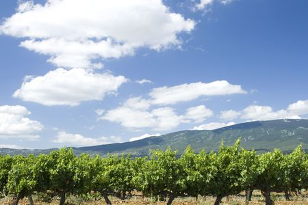 Vineyard from Provence. France Stock Photo