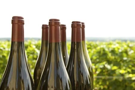 Wine bottles Vineyard Bourgogne France