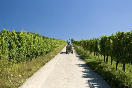 Vineyard route de wine