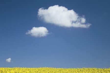 field with blue sky, Stock Photo