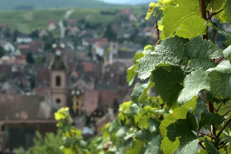 Vineyard Alsace with village,