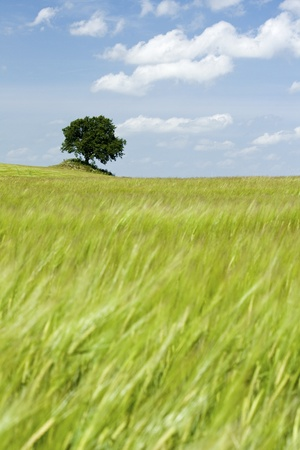 Green grass field with tree