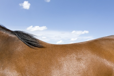 Horseback, blue sky