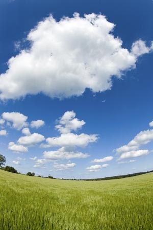 Green field blue sky Stock Photo