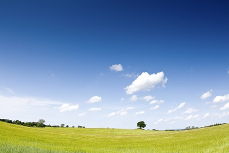 Landscape with green field
