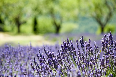 Provence, typisch landschap.
