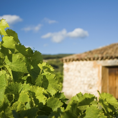 Farmhouse in Vineyard, Provence France.