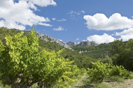 Vineyard, from Gigondas, Provence.France.